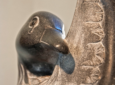 Oil Bird Detail Photo by Myrna Cambianica.