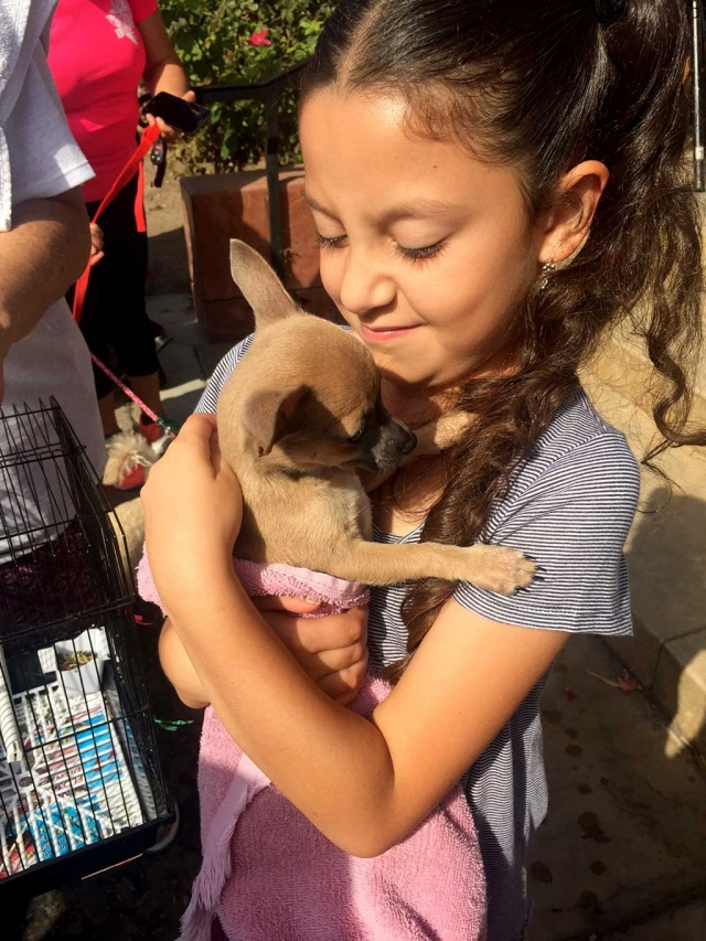 The Saint Francis of Assisi Fall Fiesta took place on Sunday, October 1, 2017 at the Catholic Church located at 1048 W. Ventura St., Fillmore. The popular fundraising event drew a large crowd which enjoyed the tacos, enchiladas and pasta available under the canopies. Blessing of the Animals attracted all sizes of dogs, caged birds and a large parrot, a bunny, a horse and a llama. Right, Sophia, age 7, brought Lucy her baby Chihuahua to be blessed. A Silent Auction with about 50 baskets ranging from baby items and home-crocheted blankets, to wine, goat soap and gardening were presented. Folklorico and Hula Dancers entertained the crowd, along with a Jolly-Jump and goldfish game for the little ones, and bake sale full of goodies for everyone. Photos couresty Katrionna Furness.
