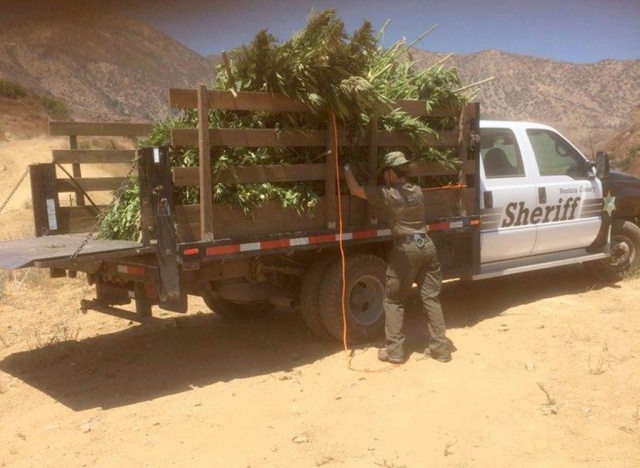An illegal marijuana operation west of Fillmore near Snow Canyon was raided on Tuesday, August 25, around 10am. Reports of four helicopters and multiple sheriffs and forestry units on scene. There are no further details at this time.