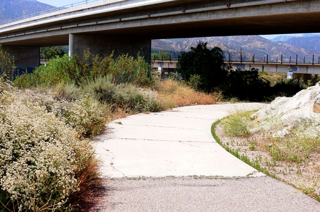 On Sunday, June 21st at 10:30am a Fillmore woman was attacked while jogging along the Sespe Creek Bike Path near Shiells Park, Fillmore. Police are still searching for the suspect.